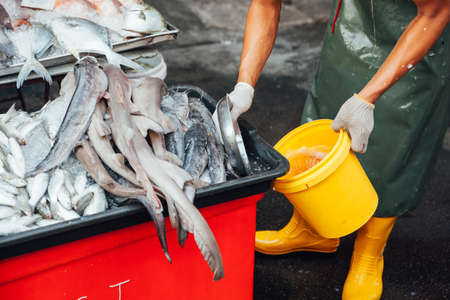 animal body part: Fresh fish at the local market of George Town, Penang, Malaysia. Stock Photo