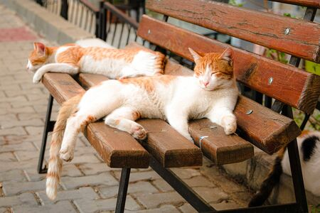 Red and white cute and laid-back stray cats resting on wooden bench. Izmir, Turkey. 스톡 콘텐츠