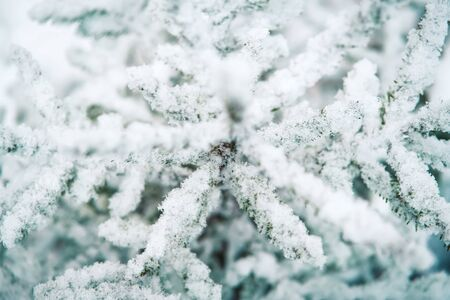 White abstract background with pine tree branch covered with snow. Close-up winter concept. Stock fotó