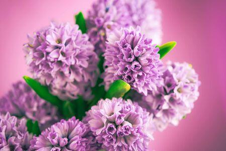beautiful spring purple hyacinth flowers background. Easter lilac composition. Zdjęcie Seryjne