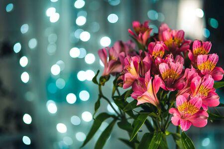 Beautiful bouquet of pink alstroemeria flowers on blue evening bokeh lights background close-up.