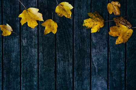 Yellow little autumn maple leaves over old grey wooden background.
