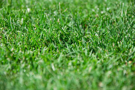 Cut grass Stock Photo