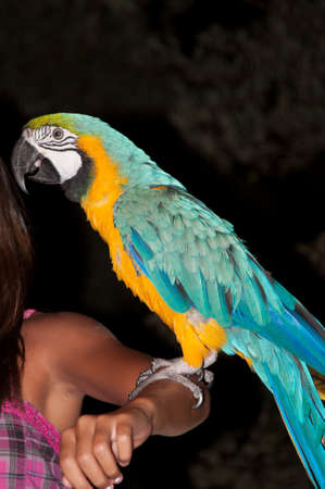 unsuspecting: parrot resting on the arm of a woman