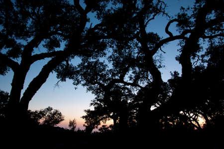 horizon at dusk to the shadow of trees Stock Photo