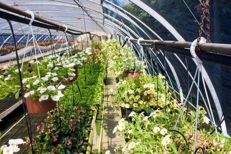 nursery of flowers and plants for garden in greenhouse photo