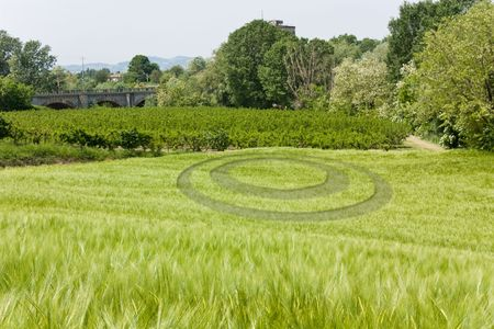mysterious round circle in wheat field photo