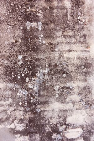 plaster mould: dirty and mouldy old  wall with scratched plaster and remains of paint - grunge abstract background
