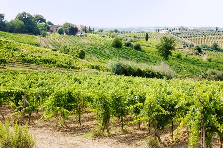 hills of tuscany with vineyard for production of chianti italian wine photo