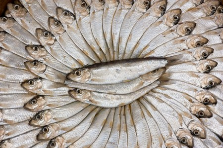 sardinas: preparaci�n tradicional de sardinas mediterr�neos, preservado a trav�s de la inmersi�n en salmuera y presiona en el cuadro de ronda  Foto de archivo