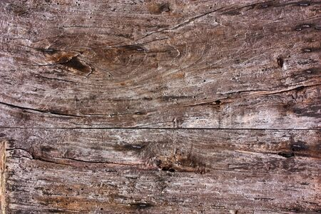 knotty: plank of knotty wood with woodworm holes, old worm-eaten wooden board, background texture of aged grainy hardwood