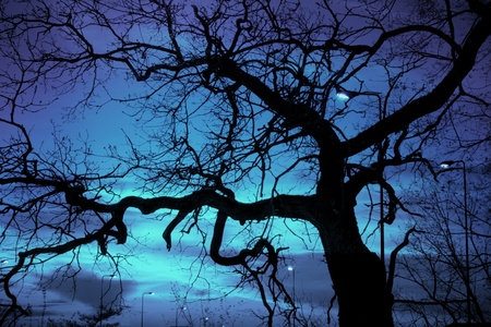 verontrustend landschap, kale boom en straat lamp op halloween nacht, verontrustende vreemd licht op de donkere hemel Stockfoto