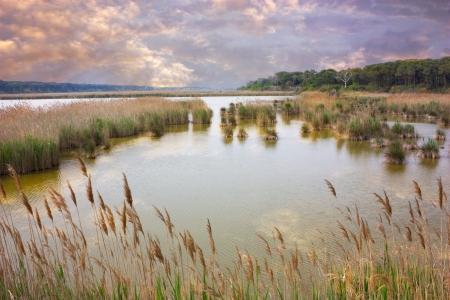 Sumpf mit Schilf und rennt unter einem wolkigen Himmel - natürliche reserve in der Nähe von Ravenna, Italien