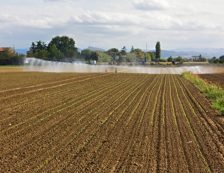 watered: agricultural irrigation - field with young plants watered with a linear irrigator
