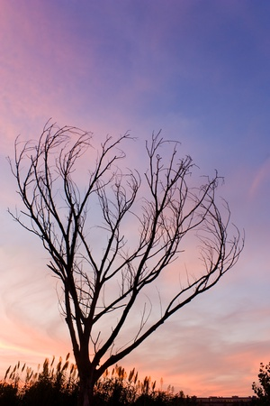 winterly: solitary bare tree in the sunset - winterly landscape Stock Photo