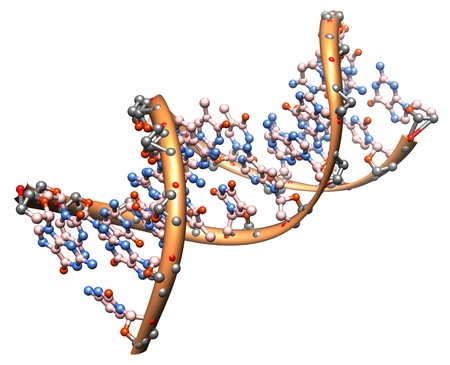 organic chemistry: model of the DNA molecule - illustration of a biological particle