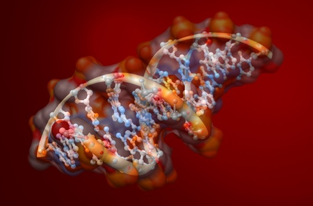 biochemistry: organic chemistry: model of the DNA molecule - illustration of a biological particle