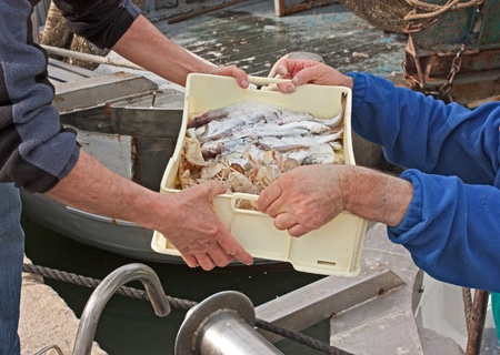 fishermen unloading crate of freshly caught fish and crustaceans passing from hand to hand in italian fishing boat