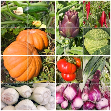 product mix: collage of vegetables - products of vegetable garden