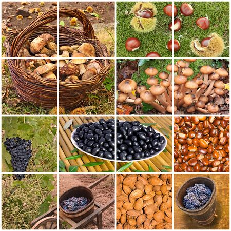 grapes and mushrooms: collage of the italian autumnal fruits  mushrooms, grapes, chestnuts, almonds, olives - typical products of the autumn in Tuscany, Italy