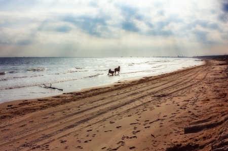 horse with buggy and rider on the beach in a cloudy morning Stock Photo - 17194346
