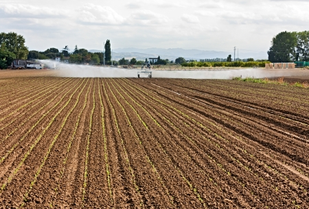 irrigator: agricultural irrigation - field with young plants watered with a linear irrigator