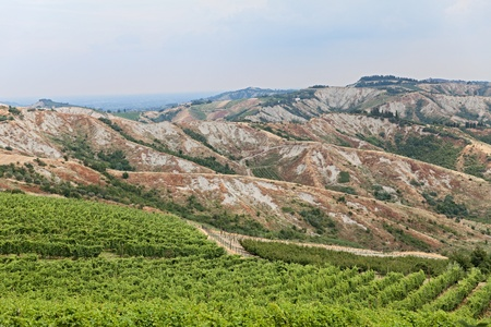 Landscape of italian hills, valley with rows of grapevine - vineyards for wine production in Romagna, Italy photo