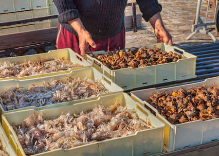 crustaceans: mediterranean fish and seafood  fishermen with crate of fresh crustaceans and shellfish Stock Photo