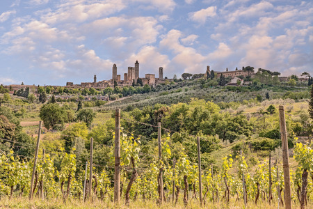 chianti: landscape of the hills of tuscany with vineyard for production Chianti italian wine with the medieval town San Gimignano in background  Stock Photo
