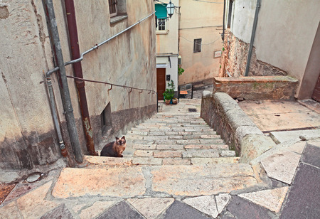 glimpse: view of the alley and staircase with cat in the old town of the ancient village Atessa, Abruzzo, Italy