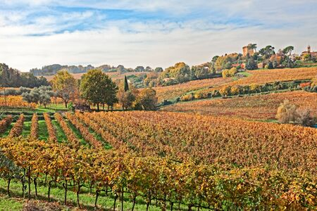 emilia romagna: landscape of italian hills, valley with rows of grapevine and medieval tower on background - countryside with vineyards for wine production in Emilia Romagna, Italy