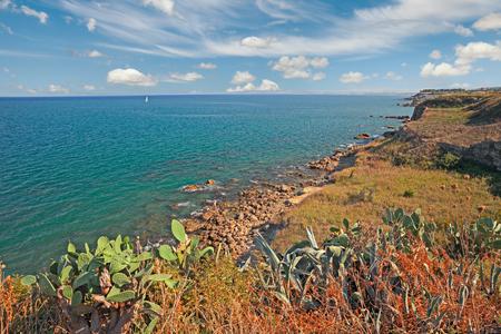 italian sea: Mediterranean landscape: cliff on the coast of the italian Adriatic sea with wild plants and cactus, near the city of Vasto in Abruzzo, Italy Stock Photo