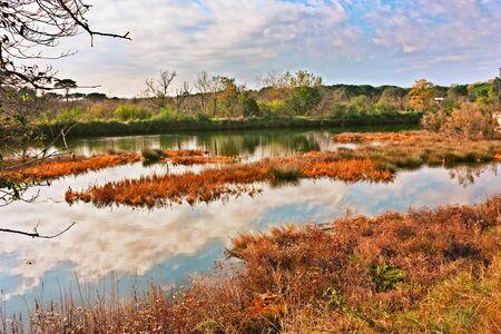 landschap van het moerasland in de buurt van Ravenna, Italië, in de Po Delta Park - moeras in de wilde natuur reservaat van de Italiaanse kust