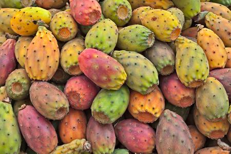 fruits of indian fig, opuntia ficus-indica, typical mediterranean cactus