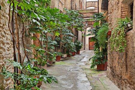 bevagna: Bevagna, Umbria, Italy: picturesque narrow alley with ancient arches and plants in the old town