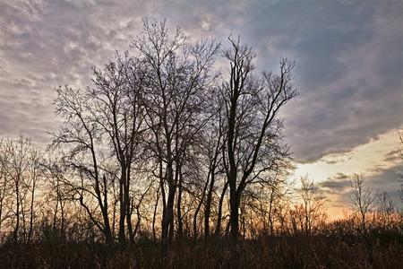 Po Delta Park, Ravenna, Emilia Romagna, Italy: landscape with bare trees at winter morning
