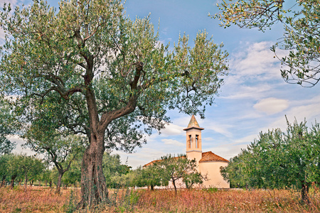 tree farming: rural landscape with olive tree and church in Chieti, Abruzzo, Italy Stock Photo