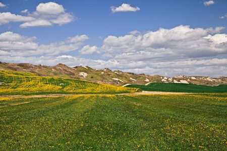 Asciano, Siena, Tuscany, Italy: landscape at spring of the countryside and hills in the area of Crete Senesi with green meadow and yellow flowers Stock Photo