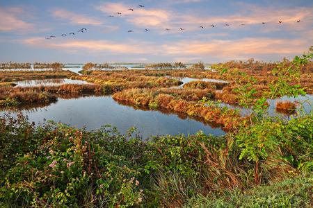 Po Delta Park, Veneto, Italien: Landschaft des Sumpfes im Naturschutzgebiet mit einem Schwarm rosa Flamingos in der Lagune von Rosolina, Rovigo