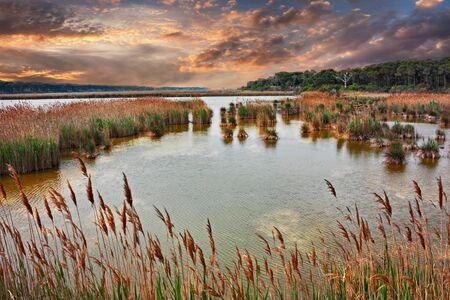 Ravenna, Emilia-Romagna, Italy: landscape at sunset of the swamp in the nature reserve Po Delta Park on the Adriatic sea coast