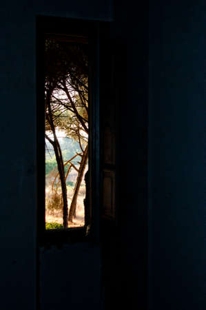 from the window of an abandoned farm house sees a Mediterranean rural landscape of pines and firs