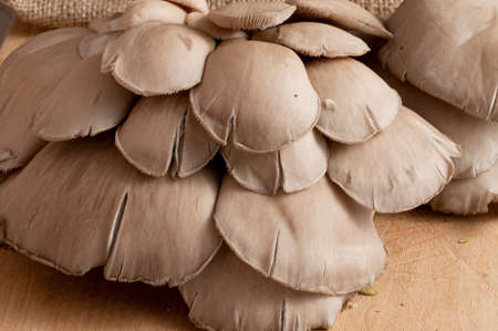 detail of bunch: detail of a bunch of fresh mushrooms on a wooden board