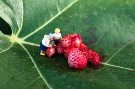fig leaf: strawberries on a fig leaf