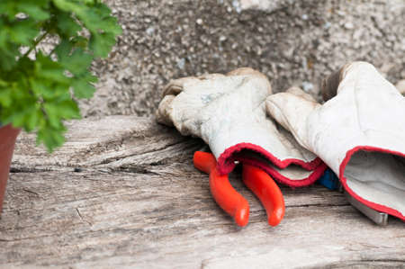 gardening gloves: gardening gloves Stock Photo