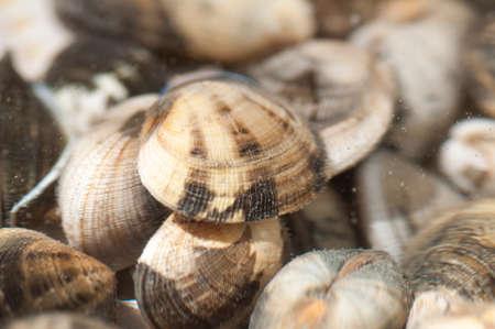 clams: Closeup of the clams