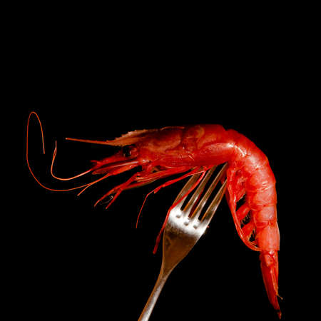 fished: red fresh shrimp on a fork with black background Stock Photo