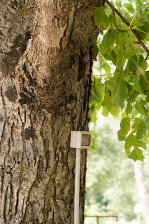infomercial: tree with electrical outlet Stock Photo