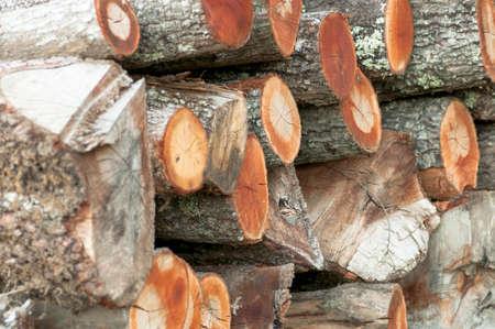cut: cut trees