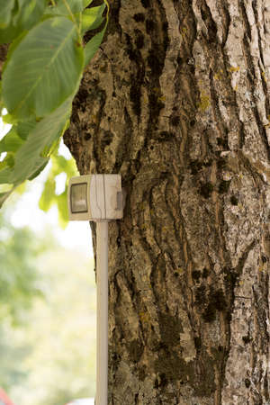 insensitive: tree with electrical outlet Archivio Fotografico