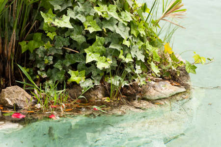 gush: fountain with rocks and plants Stock Photo